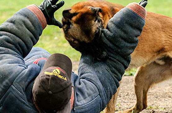 Police Dog Training | Police Patrol Detection Dogs