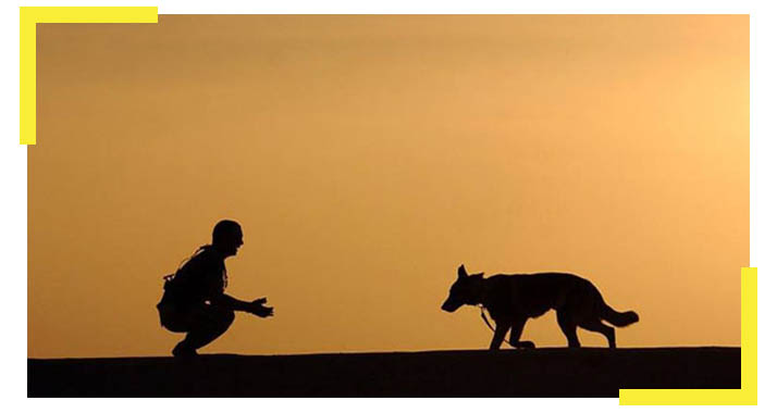 Sunset Police Dog Trainer 2